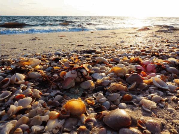 5 15 19 Barefoot Beach