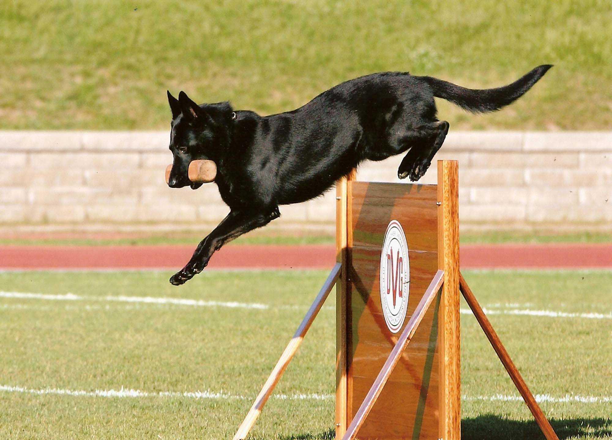 Dog trainer3
